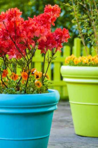 Colorful garden view with a blue and a green flower pot