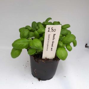 Basilic ' grand vert '