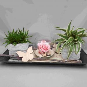 Composition plantes grasses et rose éternelle