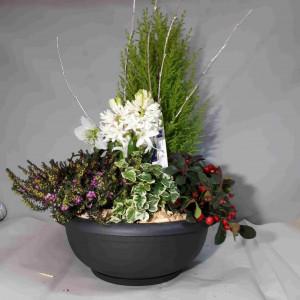 Coupe de plantes exterieurs