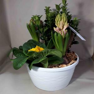 Coupe de plantes extérieur