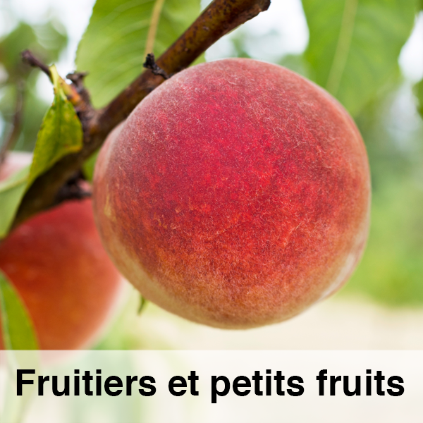 FICHE-fruitiers.png